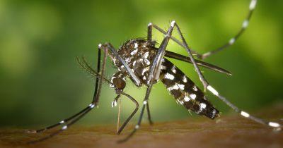 So wird Dein Sommer dieses Jahr garantiert mückenfrei!