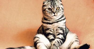 So viele Katzenbesitzer gibt es in Deutschland